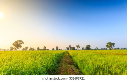 Rice Field of Farmer and sun in the morning,in Thailand