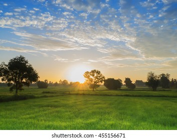 Rice Field of Farmer and sun in nature the morning,in Thailand