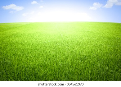 Rice field green grass blue sky with cloud cloudy landscape background