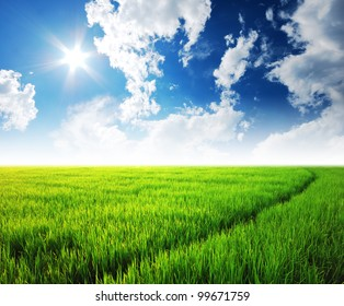 Rice field green grass blue sky cloud cloudy landscape background lawn