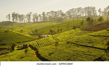 Rice field landscape at Lipton's Seat in Sri Lanka.