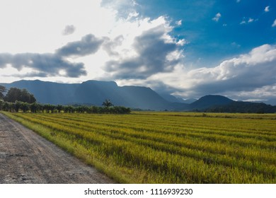 Rice field in the late afternoon sun between clouds, at the Rice Highway in Joinville, Santa Catarina - Brazil