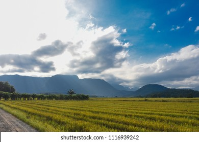 Rice field in late afternoon sun between clouds, in the Vila Nova neighborhood in Joinville, Santa Catarina - Brazil
