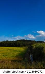 Rice field in late afternoon sun between clouds, in the Vila Nova neighborhood in Joinville, Santa Catarina - Brazil