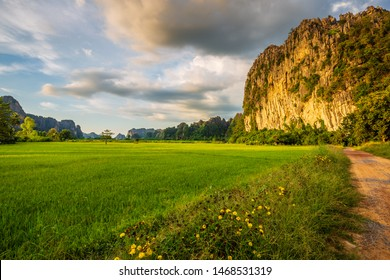 Rice field and limestone mountain, travel scenic at Noen Maprang, Phitsanilok, Thailand