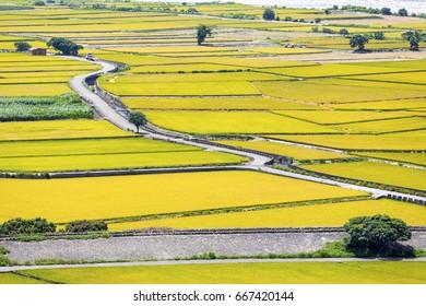 Rice field of Lotus valley in Waipu, Taichung, Taiwan