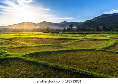 Rice field with mountain sunset background, Chiang Mai, Thailand