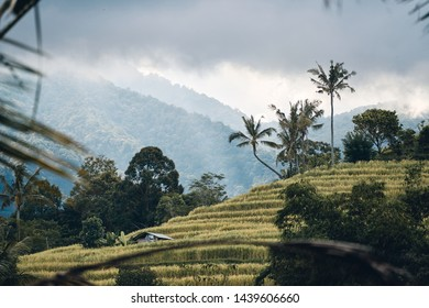 Rice field in the mountains above which clouds accumulate