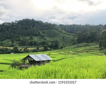 Rice field and mountains natural view