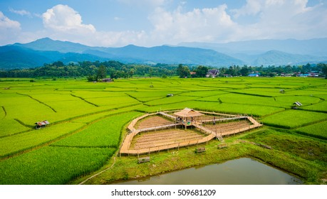 Rice field Nan