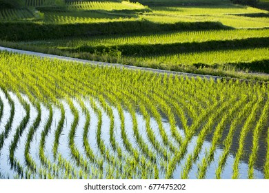 rice field in Nara Sakurai in Japan