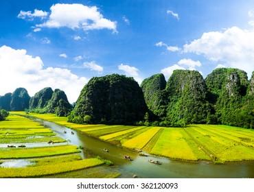 Rice field and NgoDong river in NinhBinh, Vietnam