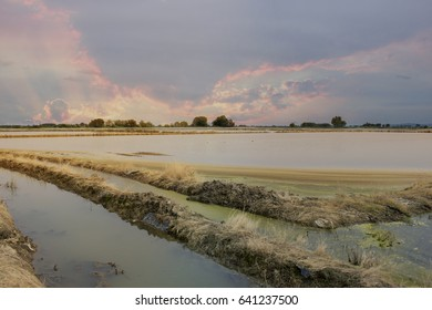 Rice Field in north of Italy, Piedmont, Vercelli.