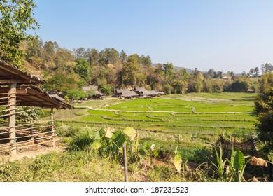 Rice Field on sunlight at thailand