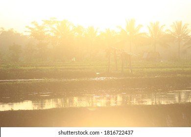 A rice field with an overexposed light background
