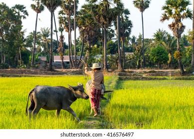 Rice field in Siem Reap, Cambodia Apr 2016