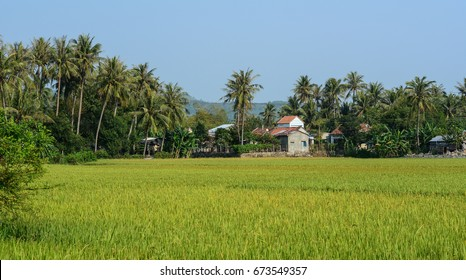 Rice field with small village in Mekong Delta, Vietnam. The Mekong Delta is a rich, lush area, where the mighty Mekong River stretches out to the sea.