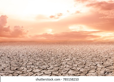 Rice field in sunset over dark cloud
