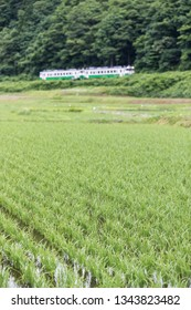 Rice field and Tadami railway line in summer season at Fukushima prefecture.