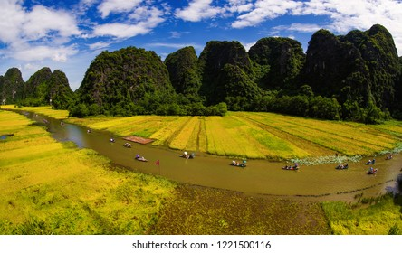 Rice field in Tam Coc - Bich Dong, Ninh Binh Province, Vietnam; June 11, 2018