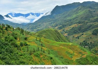 Rice field terraces at Sapa, Vietnam