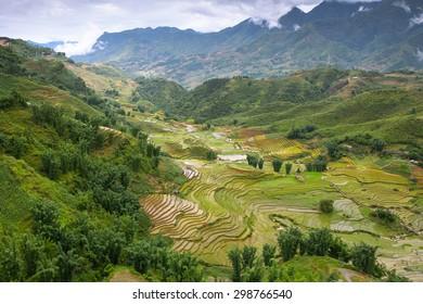 Rice field terraces at Sapa  , Yen Bai , Vietnam