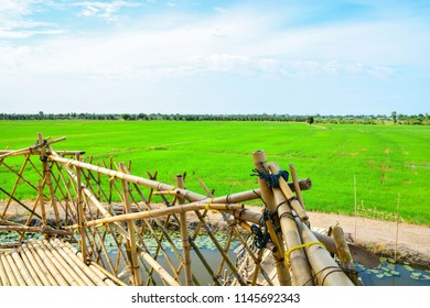 Rice field in thailand