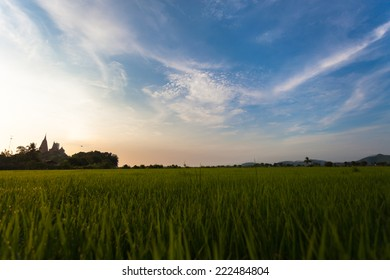 Rice Field in thailand green background