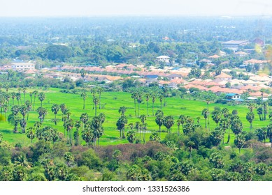 Rice field and the town