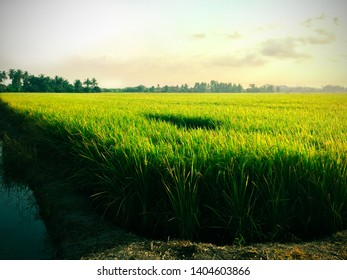 rice field are very endlessly under the blue sky, using colorful and vignette effect edit the image and lomo style concept.