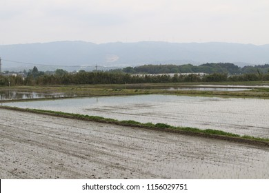 Rice field view in Mie prefecture of Japan