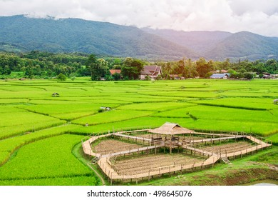 Rice field,Nan,Thailand