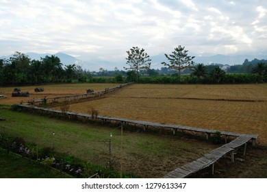 The rice fields after harvesting in the dry season become a place for homestay tourism.