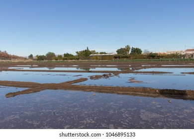 rice fields and chufa flooded in the entrance of valencia city