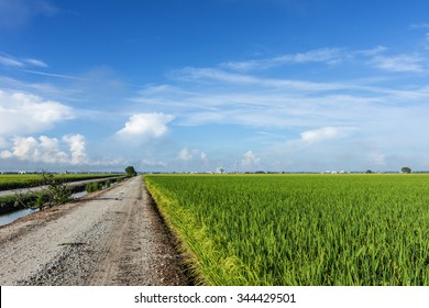 Rice Fields and Country Road in Morning
