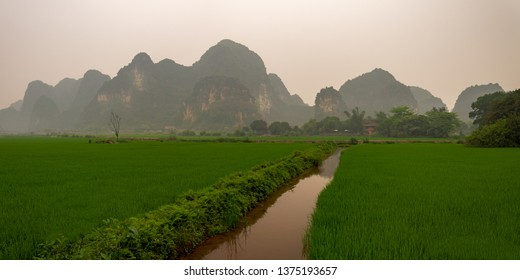 Rice Fields in the Dry Halong Bay, Nimh Binh, Vietnam