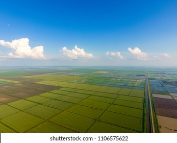 The rice fields are flooded with water. Flooded rice paddies. Agronomic methods of growing rice in the fields. Flooding the fields with water in which rice sown. View from above.