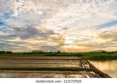 Rice fields and golden sky with sunset for background