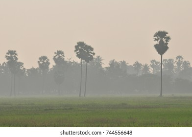 Rice fields, grass fields, grasses, sugar palm trees and white mist in the morning. Beautiful atmosphere