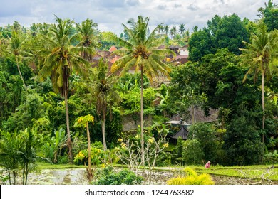 Rice fields, houses and vegetation in Ubud, Bali, Indonesia.