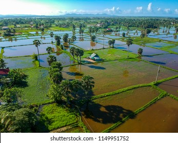 Rice fields in Kampot - Cambodia
