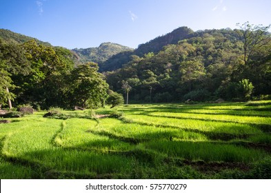 Rice Fields of knuckles mountain range, Sri Lanka.