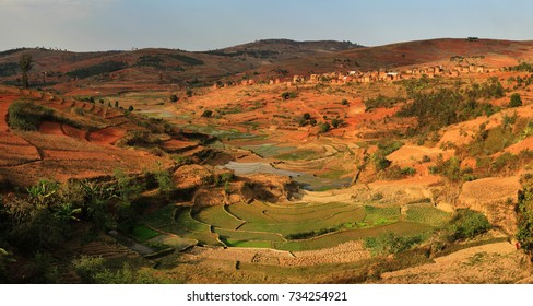 Rice fields in Madagascar