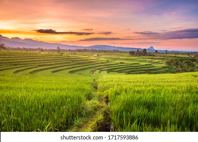 rice fields in the morning with sky sunrise