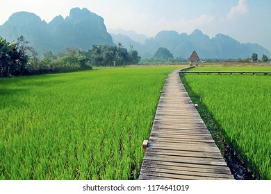 Rice Fields and Mountains in Vang Vieng, Laos. wooden path way in green rice field in the morning