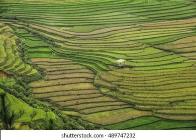 Rice fields on terraced of Mu Cang Chai, YenBai, Vietnam, Yenbai Province located in Northwest Vietnam.