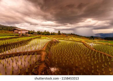 Rice fields on terraced of Pa Pong Pieng, Mae Chaem, Chiang Mai, Thailand