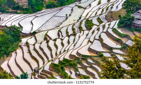 Rice fields on terraced. Fields are prepared for planting rice. Ha Giang. Huyen Xin Man, Northen Vietnam