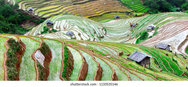Rice fields on terraced. Fields are prepared for planting rice. Lim Mong, Huyen Mu Chang Chai, Northen Vietnam