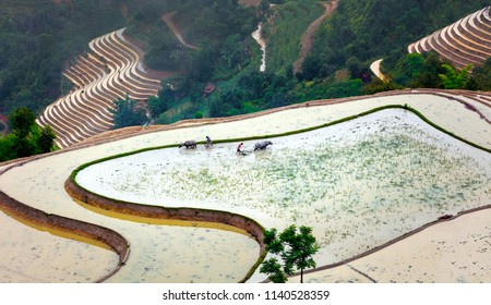 Rice fields on terraced. Fields are prepared for planting rice. Ha Giang. Huyen Hoang Su Phi. Northern Vietnam
